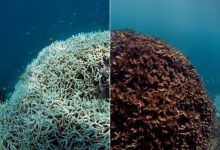 Global Warming is Affecting the Growth and Recovery of Australia's Great Barrier Reef