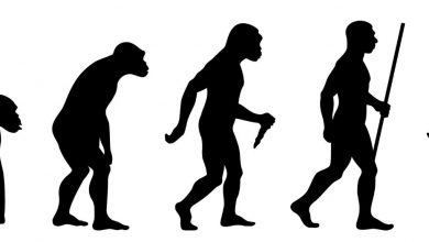 Study Reveals Why Human Walk Upright