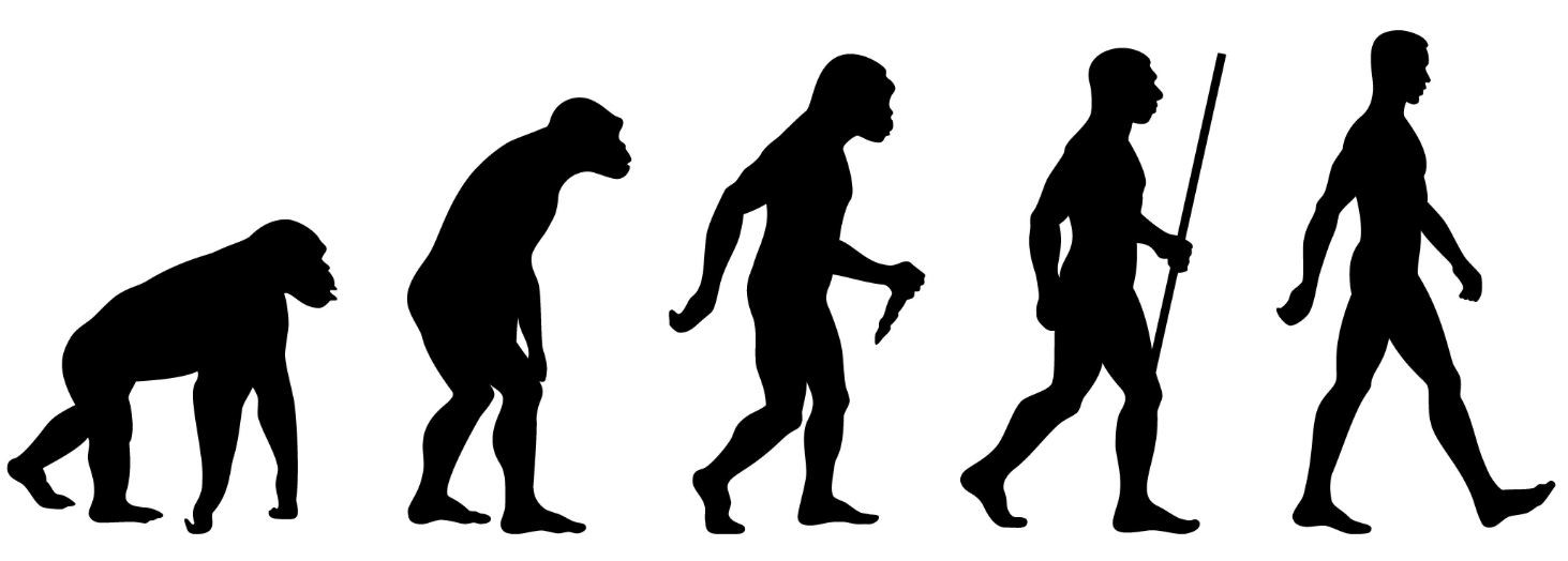 Study Reveals Why Human Walk Upright