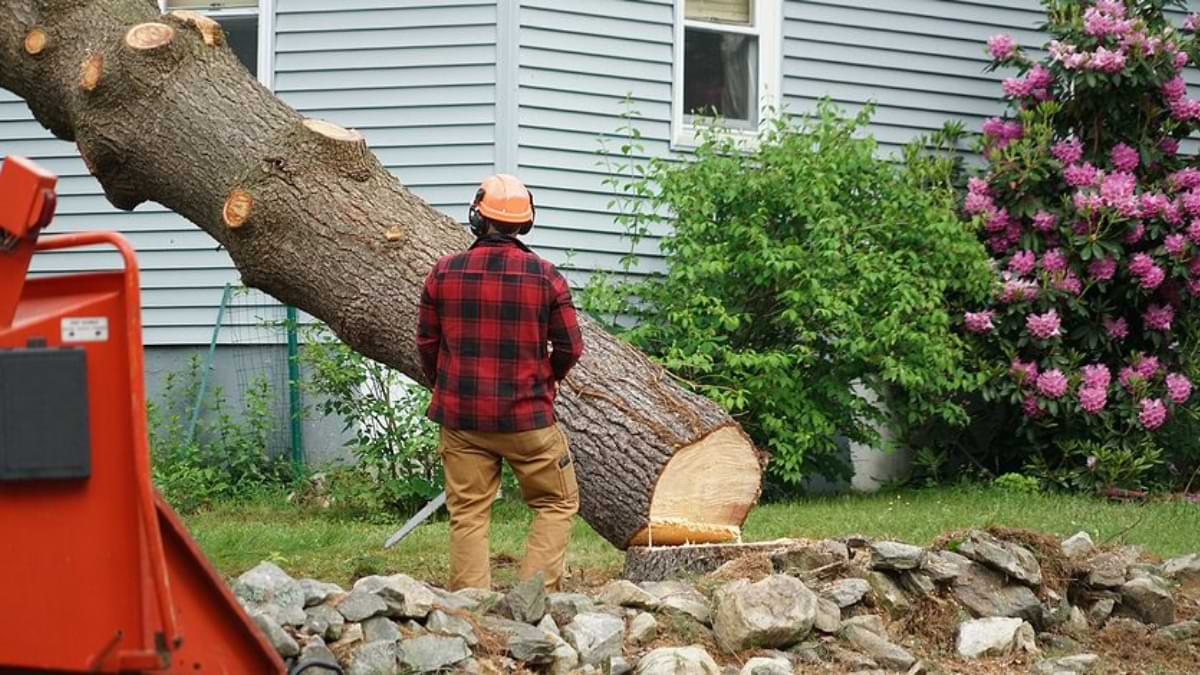 How Arborist Will Help In Maintenance & Renovation Of Your Yard